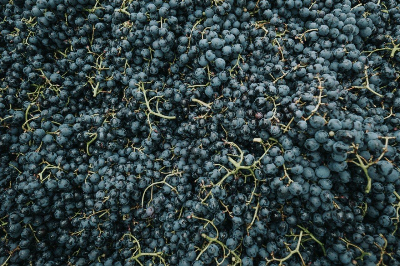 De druiven zijn geplukt in een bak